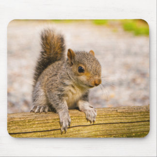 Cute Little Baby Squirrel Mouse Pad