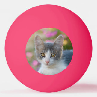 Cute Little Bicolor Kitten Fluffy Photo Cat Lovers Ping Pong Ball