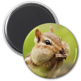 Cute Little Cheeky Chipmunk 6 Cm Round Magnet