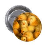 Cute Little Chicks Pinback Buttons