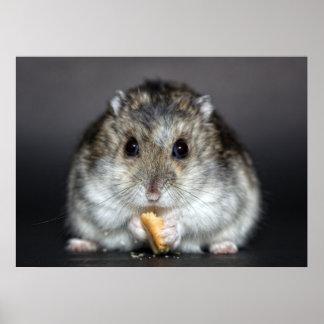 Cute little hamster eating poster