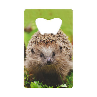 Cute Little Hedgehog in the Forest