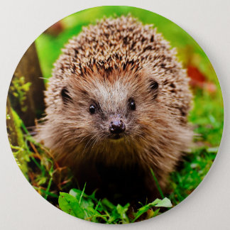 Cute Little Hedgehog in the Forest 6 Cm Round Badge