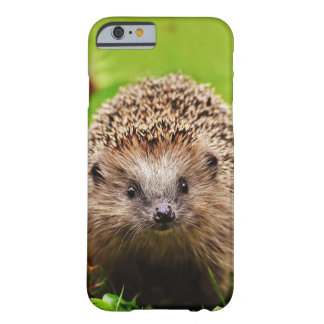 Cute Little Hedgehog in the Forest Barely There iPhone 6 Case