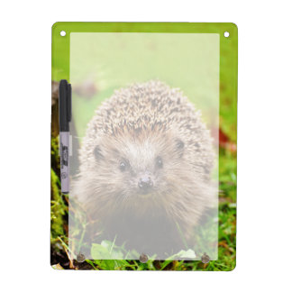 Cute Little Hedgehog in the Forest Dry Erase Board