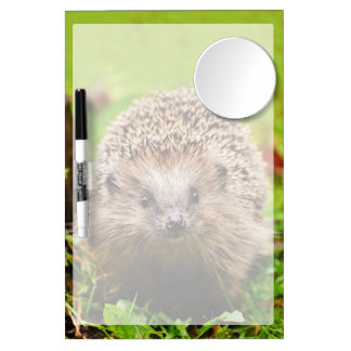 Cute Little Hedgehog in the Forest Dry Erase Board With Mirror