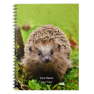 Cute Little Hedgehog in the Forest Notebooks