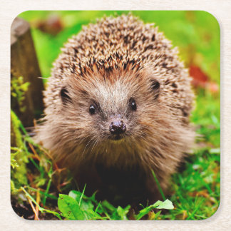 Cute Little Hedgehog in the Forest Square Paper Coaster