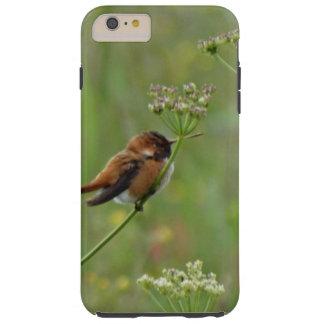 Cute little Hummingbird Tough iPhone 6 Plus Case