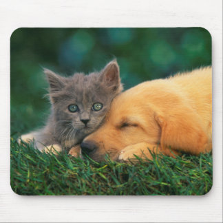 Cute little Kitten and puppy together Mouse Pad