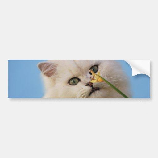 Cute little Kitten Bumper Stickers