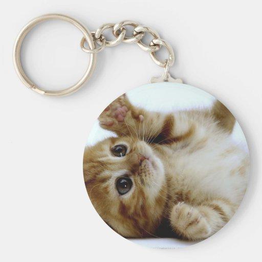 cute little kitten cat pet ginger tabby keychain