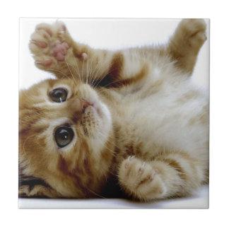 cute little kitten cat pet ginger tabby small square tile