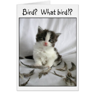Cute little kitten with bird feathers card