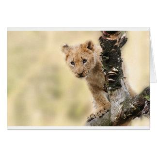 CUTE LITTLE LION CUB RANGE CARD
