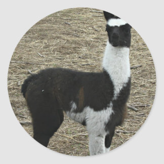 Cute little Llama dude Classic Round Sticker