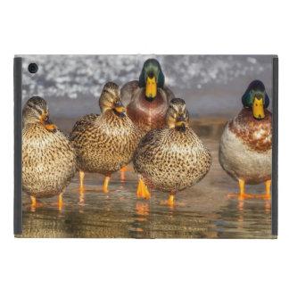 Cute Little Mallard Ducks iPad Mini Case