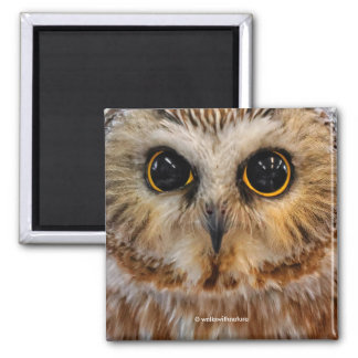 Cute Little Northern Saw Whet Owl Magnet