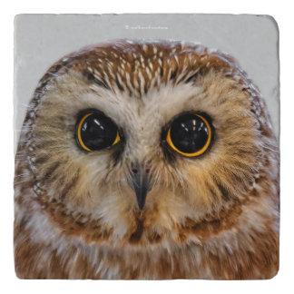Cute Little Northern Saw Whet Owl Trivet