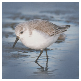 Cute Little Sanderling at the Beach Fabric