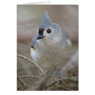 Cute Little Tufted Titmouse Card
