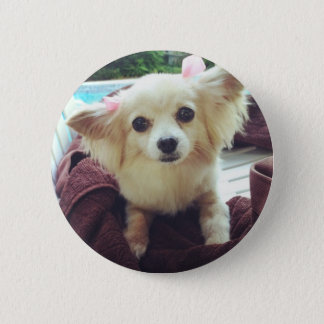 Cute Long-Haired Chihuahua 6 Cm Round Badge
