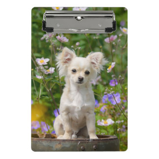 Cute long-haired cream Chihuahua Dog Puppy Photo - Mini Clipboard