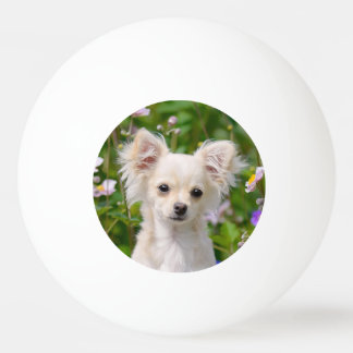 Cute long-haired cream Chihuahua Dog Puppy Photo Ping Pong Ball