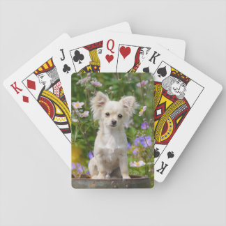 Cute long-haired cream Chihuahua Dog Puppy Photo . Playing Cards