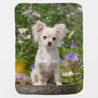 Cute longhair cream Chihuahua Dog Puppy Pet Photo Baby Blanket