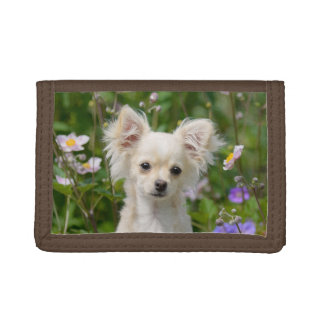 Cute longhair cream Chihuahua Dog Puppy Pet Photo Trifold Wallets