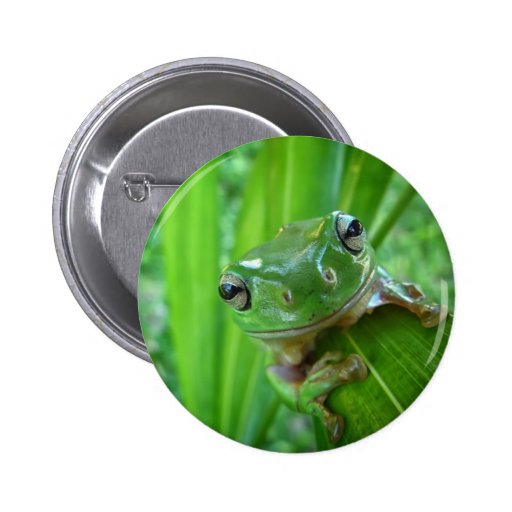Cute Looking Tree Frog Close Up Buttons