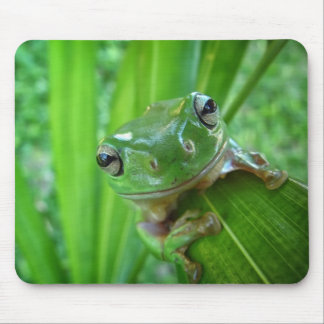 Cute Looking Tree Frog Close Up Mouse Pad