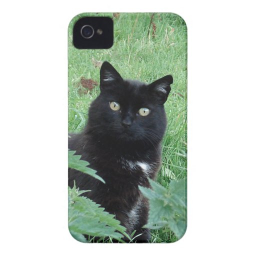 Cute Lucky Black Cat On iPhone 4 Case