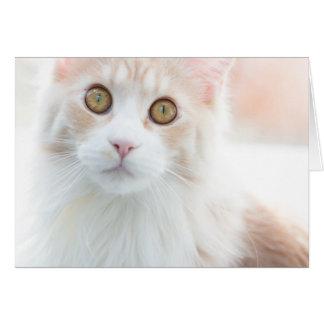 Cute Maine Coon kitten Card