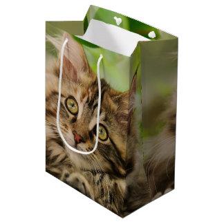 Cute Maine Coon kitten Medium Gift Bag