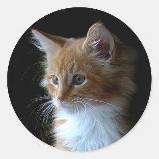 Cute Maine Coon kitten sticker