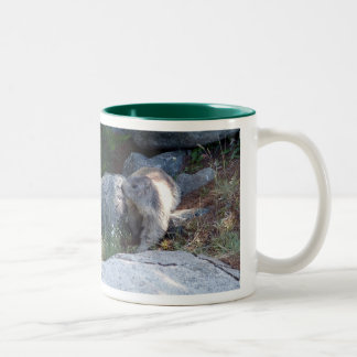 Cute marmot -- Swiss mug