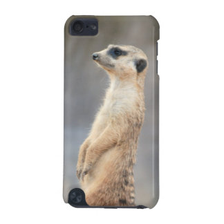 Cute Meerkat iTouch Case iPod Touch (5th Generation) Cover