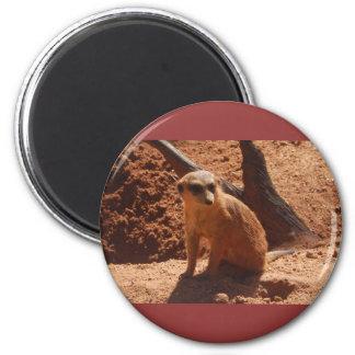 Cute Meerkat magnet