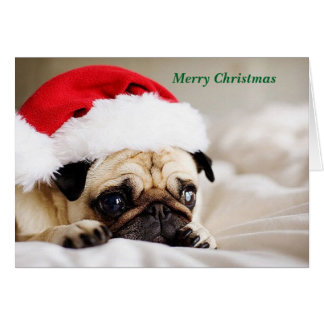 Cute Merry Christmas Pug Puppy Card