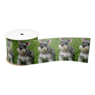 Cute Mini Schnauzer on Grass Spool of Ribbon Satin Ribbon