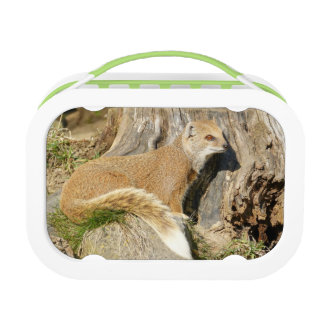 Cute Mongoose Animal Lunch Boxes