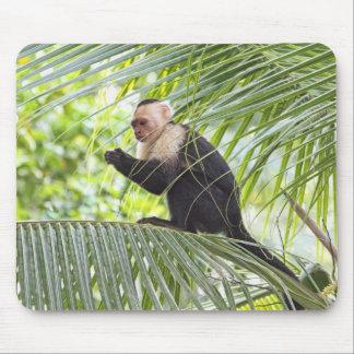Cute Monkey on a Palm Tree Mouse Pads