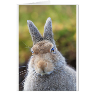 cute mountain hare card