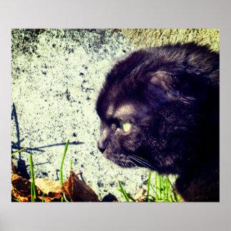 Cute Munchkin Cat In The Sunlight Poster