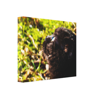 Cute Munchkin Cat Looking At Birds Canvas Print