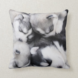 Cute Husky Cushions - Decorative & Throw Cushions | Zazzle AU