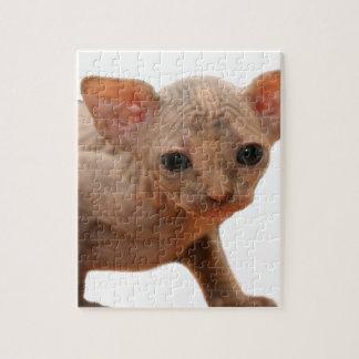 Cute newborn sphynx kitten puzzles