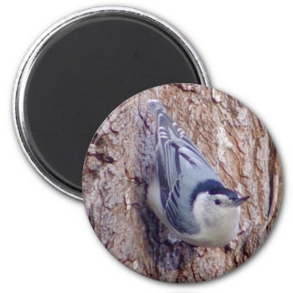 Cute Nuthatch Bird Magnet